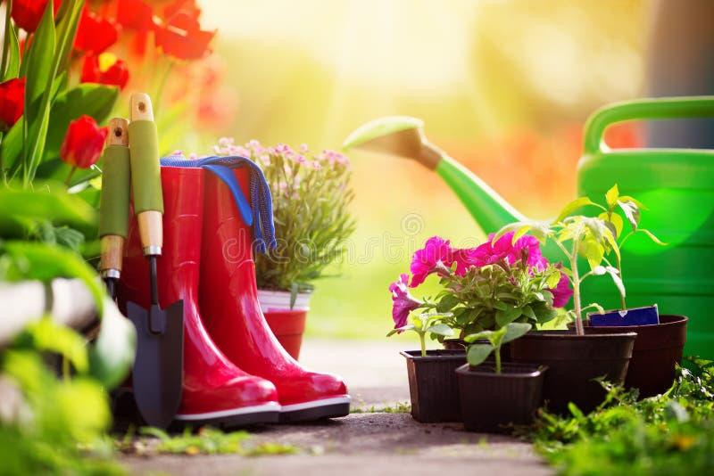 Jeunes plantes de fleur et de légume s'élevant dans le jardin images libres de droits