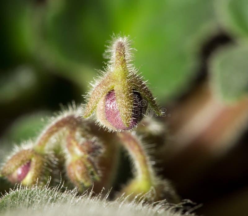 Jeunes plantes de fleur Macro image libre de droits