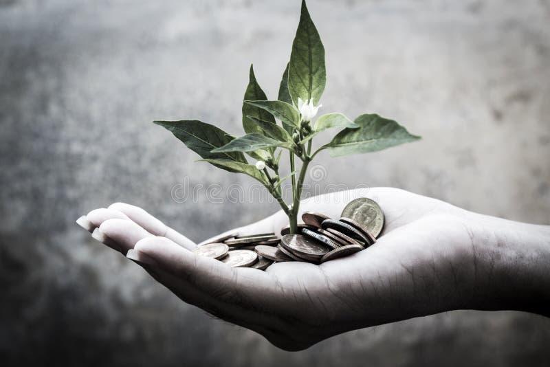 Jeunes plantes de la richesse image libre de droits