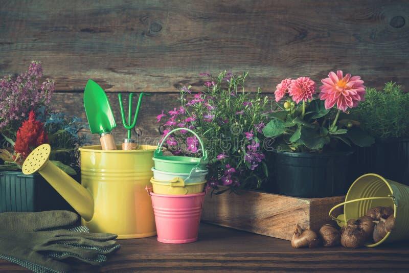 Jeunes plantes des plantes et des fleurs de jardin dans des pots de fleurs Boîte d'arrosage, seaux, pelle, râteau, gants photos stock
