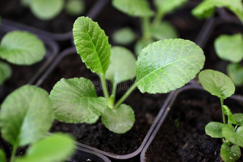 Jeunes plantes des fleurs 001 photographie stock libre de droits