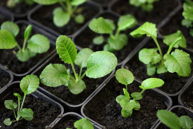 Jeunes plantes des fleurs 002 photographie stock libre de droits