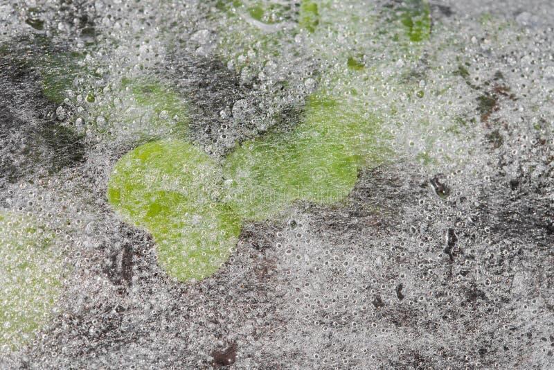 Jeunes plantes sous le textile non tissé photographie stock