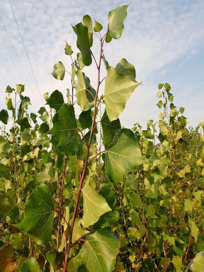 Download Jeunes pousses fraîches photo stock. Image du buissons - 87707940