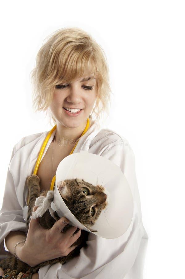 Jeunes vétérinaire et chat image libre de droits