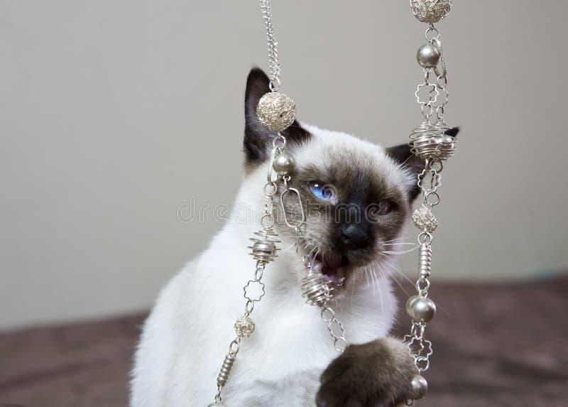 Jeux aux cheveux courts de point de joint de couleur de chaton avec des perles, la petite profondeur de l'acuité photo libre de droits