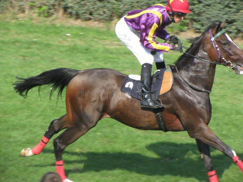 Jeux de cavalier de Ljubicevo photo libre de droits