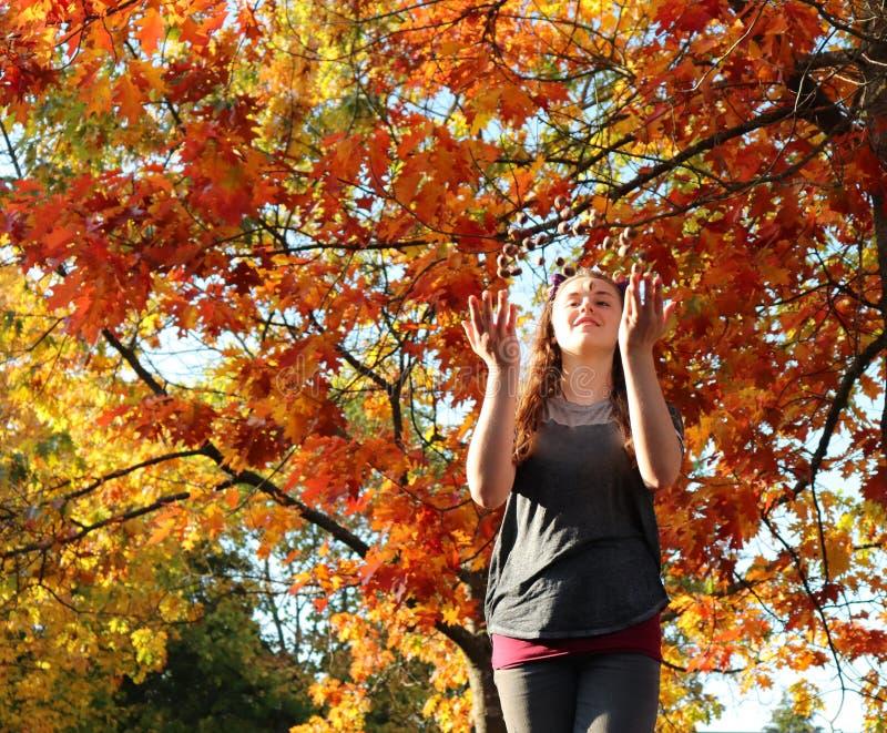 Jeux de fille avec des glands un jour d'automne en Allemagne photos libres de droits