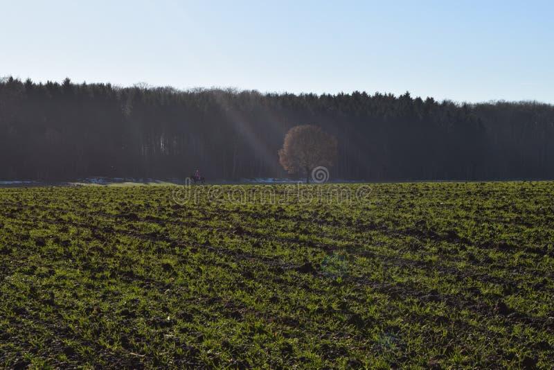 Jeux légers dans le paysage d'automne photos libres de droits