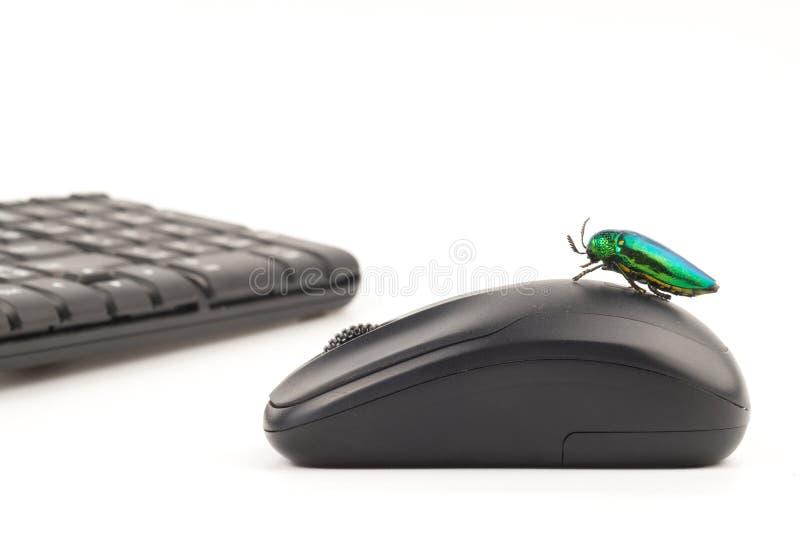 Jewel beetle or metallic wood boring beetle close up stock image