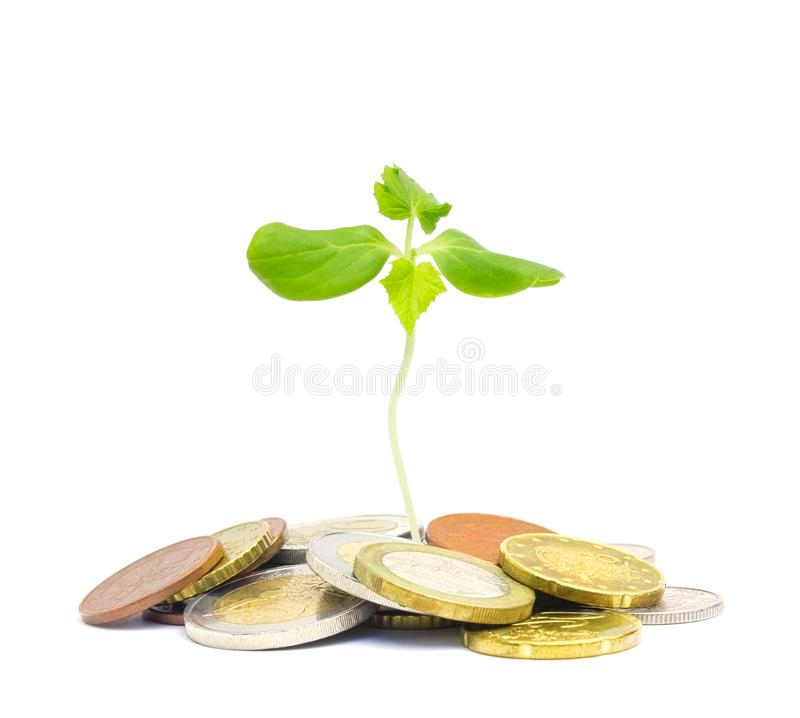 Jewish charity concept. Tzedakah, translated like charity. A photo of money, heap of euro coins and a small green sprout growing. From the coins. Business stock photos