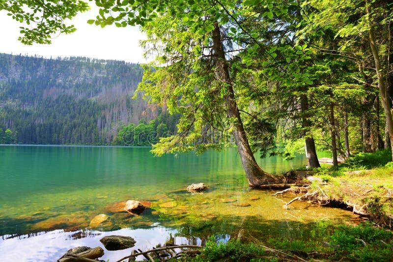 Jezero noir de Cerne de lac dans la République Tchèque image stock