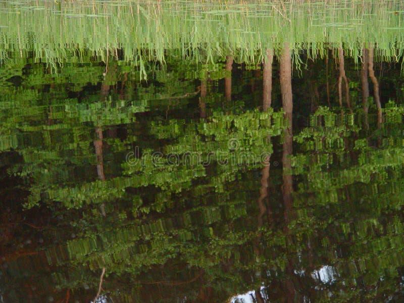 Jeziora lustro zdjęcie stock