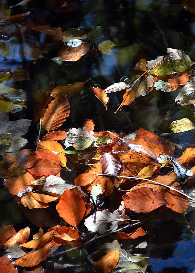 Jeziora plitvice w Croatia fotografia royalty free