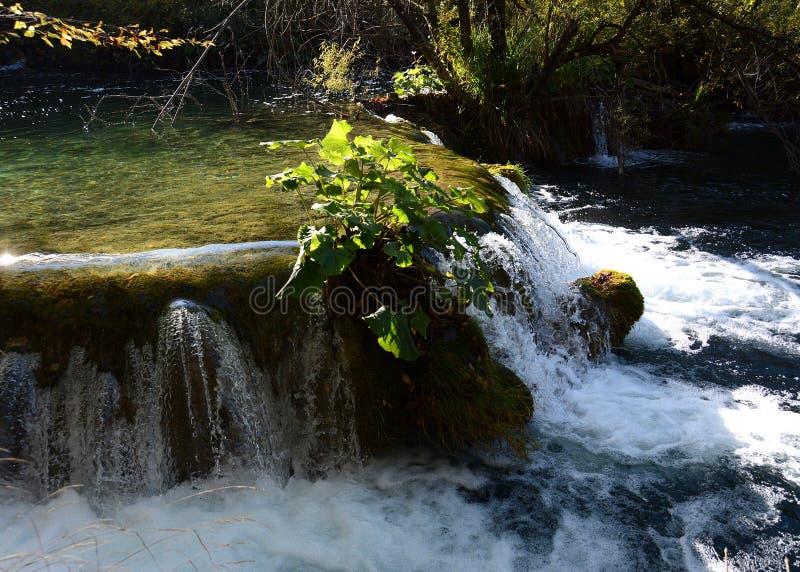 Jeziora plitvice w Croatia zdjęcia stock