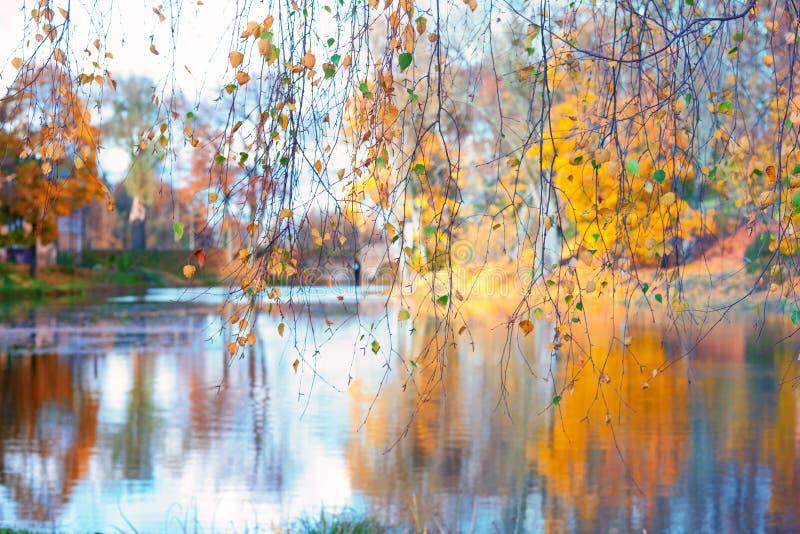 Jeziora przez brzoz gałąź obraz stock