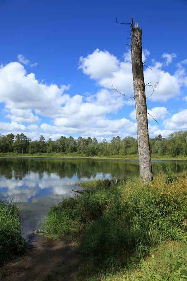 Jeziora wśród Itasca stanu parka zdjęcia stock