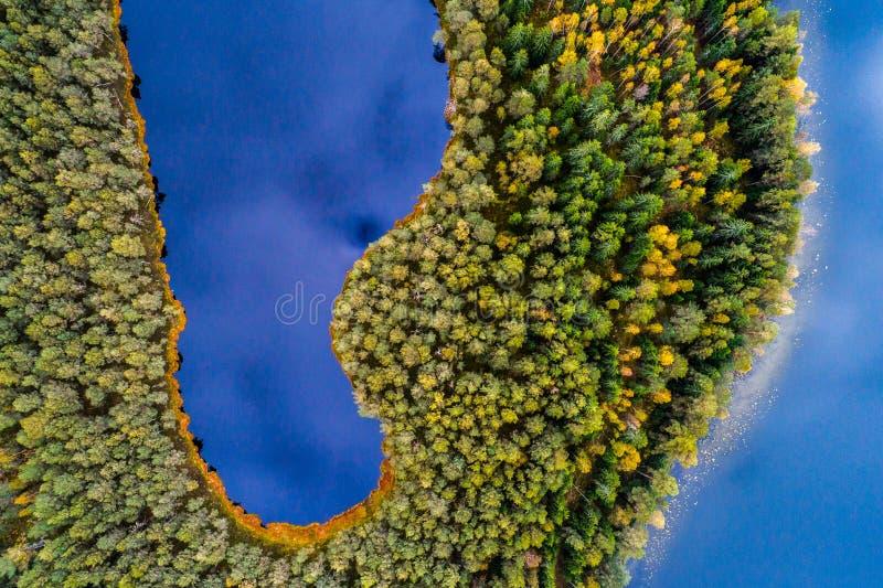Jeziora w lesie, odgórny widok obraz royalty free