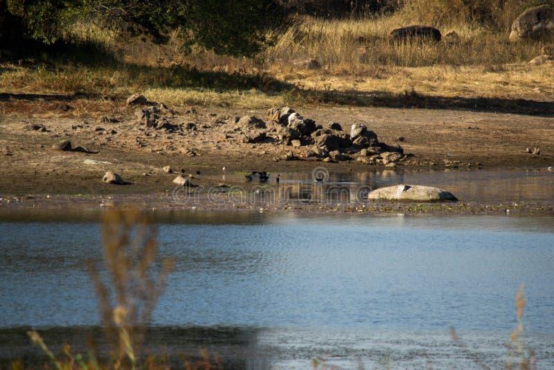 Jeziorem, rzeki strona zdjęcie stock