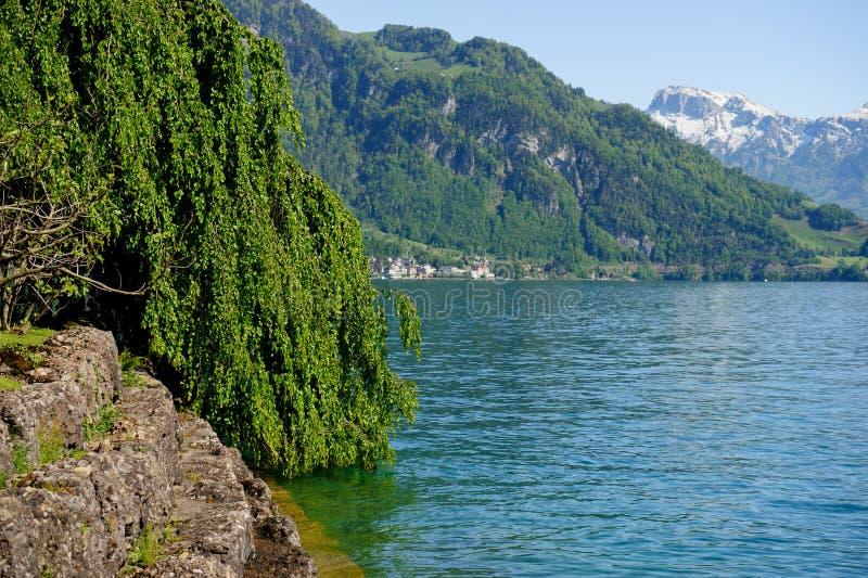 Jeziorna Lucerna obraz royalty free