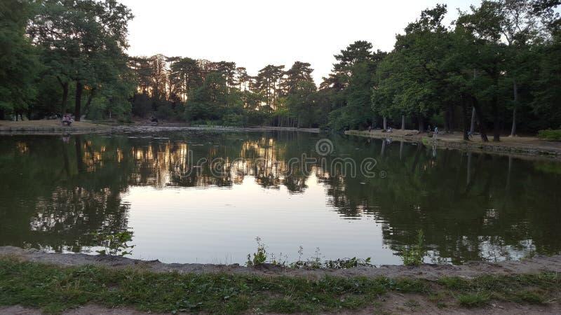 jeziorne czarowne, jeziorne kaczki, obrazy royalty free