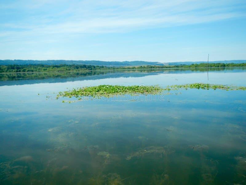 Jeziorne zielenie zdjęcia stock