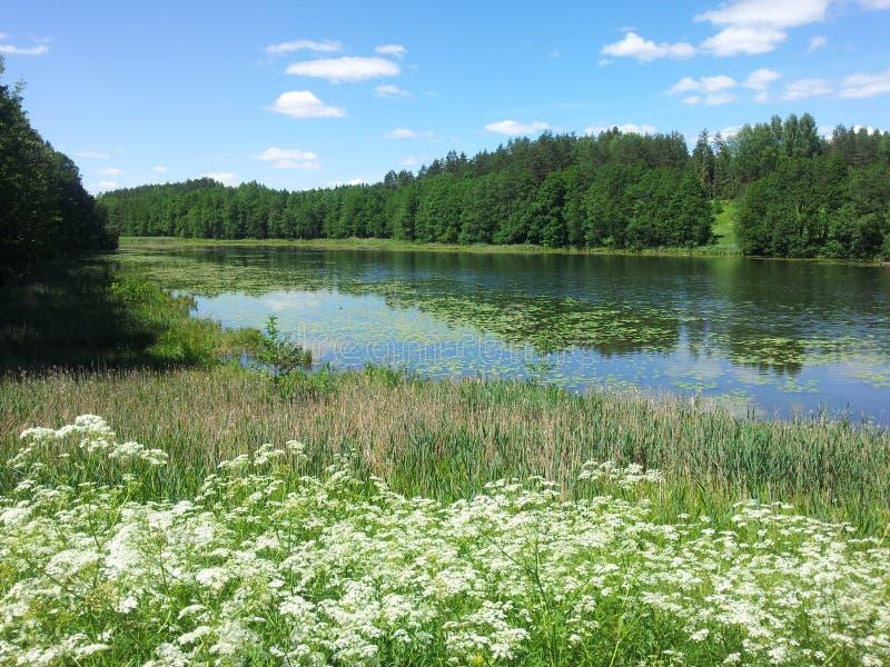 Download Jeziornego Å ½ Alieji PrÅ