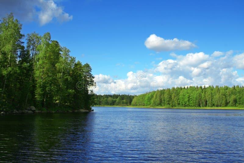 jeziorni drewna obraz stock