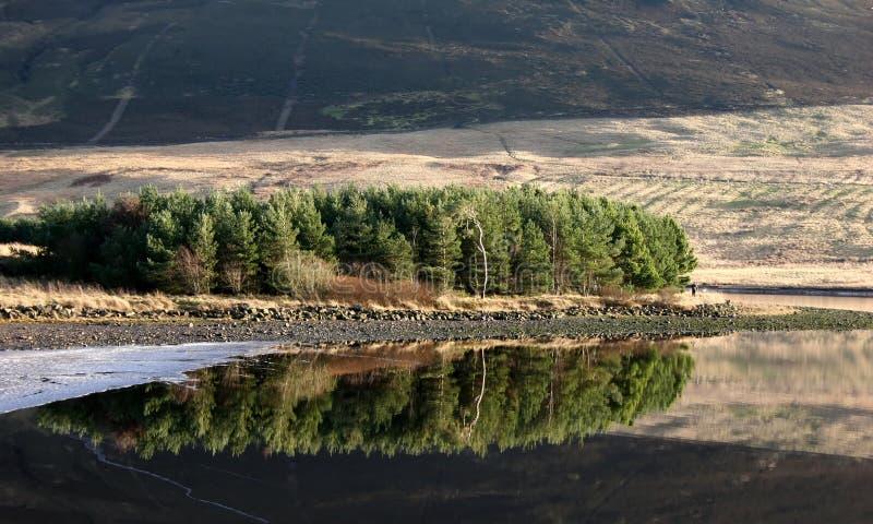 jeziorni drzewa obraz royalty free