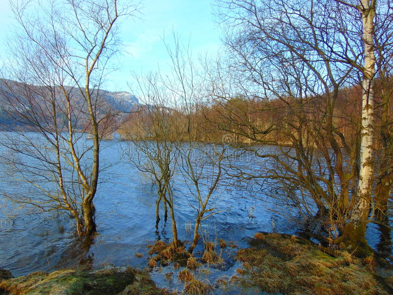 Jeziorni okręg wody drzewa zdjęcie stock