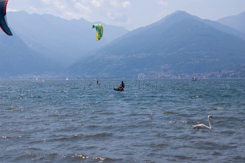 Jeziorny Como Włochy, Lipiec, - 21, 2019 Wodny sport: kitesurfers surfuje wiatr na falach i dopłynięcia łabędź na jaskrawym pogod zdjęcie stock