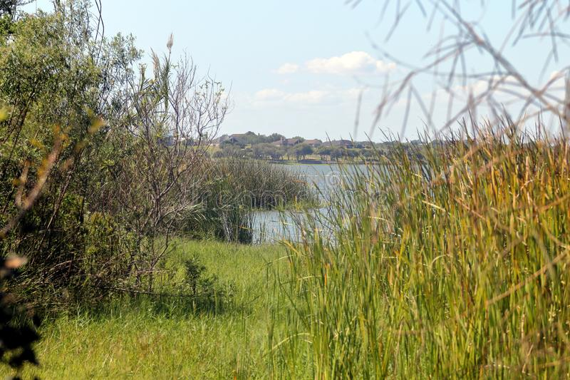 Jeziorny corpus christi stanu park, Teksas zdjęcia royalty free