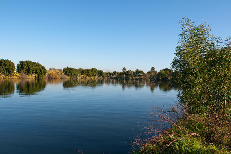 jeziorny drewno zdjęcia stock