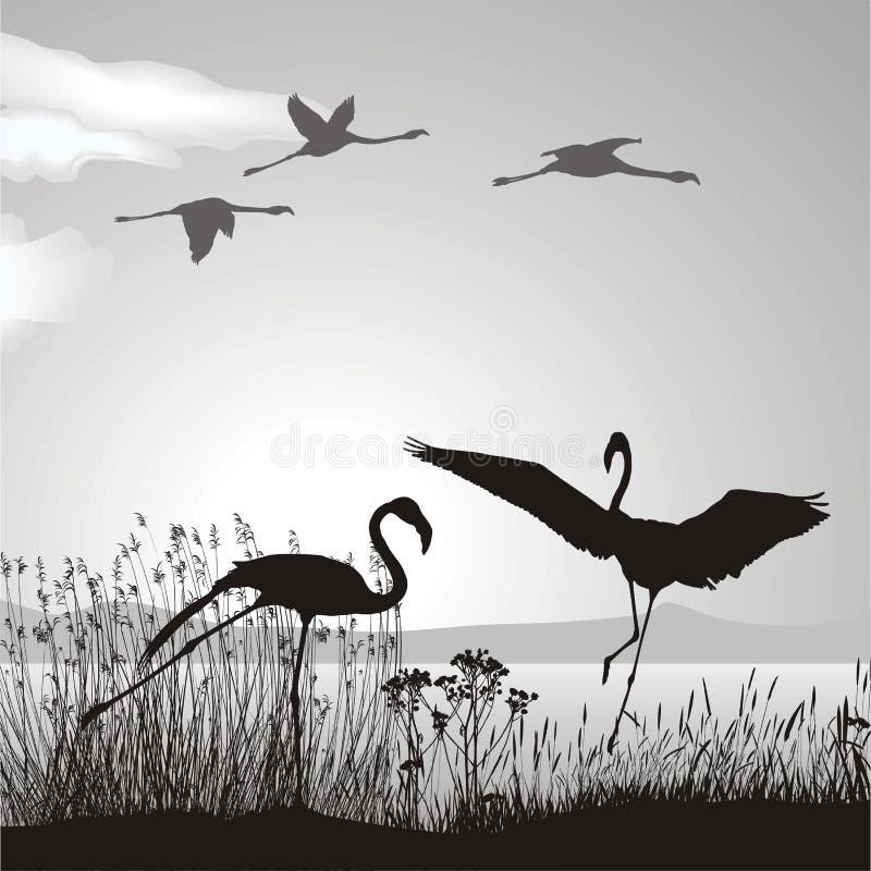 jeziorny flaminga brzeg ilustracji