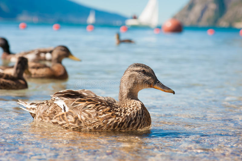 Jeziorny Garda fotografia royalty free