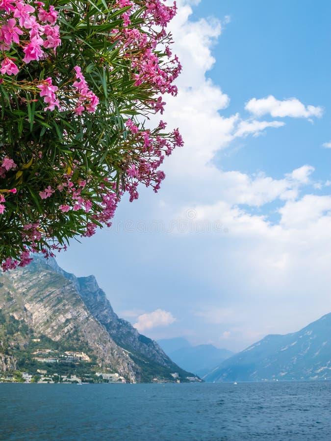Jeziorny Garda z kwiatami Nerium oleandrowy drzewo w przedpolu obrazy stock