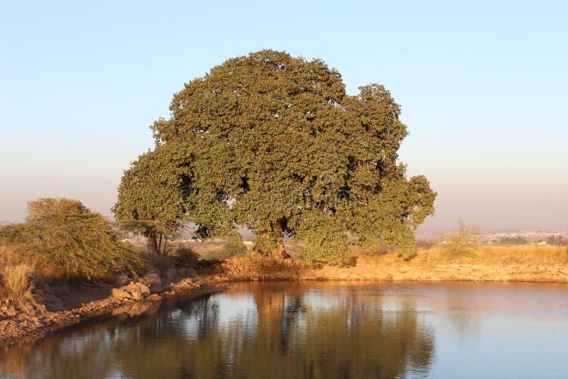 Jeziorny i Gęsty ulistnienie majestatyczny drzewo zdjęcia stock