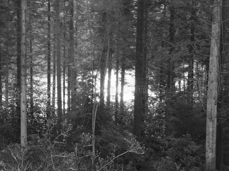 Jeziorny jaśnienie przez drzew zdjęcia royalty free