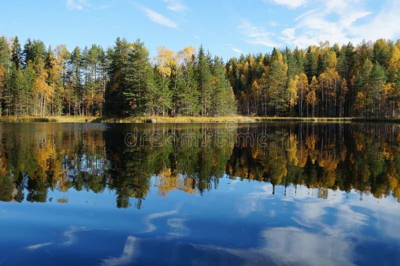 Jeziorny Kodari w jesieni jeziorny brzeg odbija w spokojnym gładzi wodę Zielone sosny, żółci deciduous drzewa zdjęcia stock
