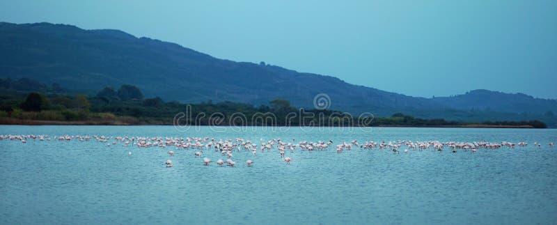 Jeziorny Korission jest bardzo znacząco ekosystemem Corfu, dokąd wiele ptaki migrujący jak różowi flamingi zatrzymują fotografia stock