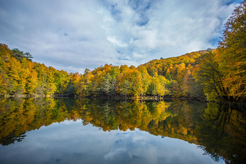 Jeziorny lasowy odbicie fotografia stock