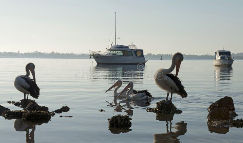 Jeziorny Macquarie NSW obrazy royalty free