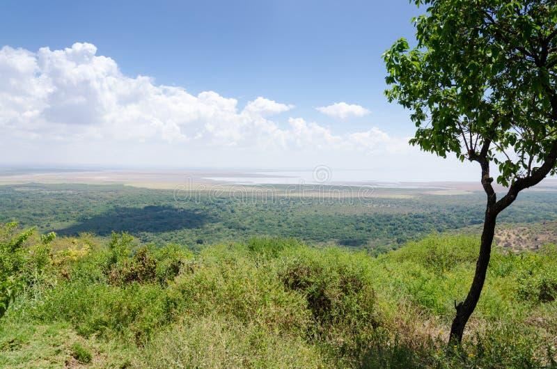 Jeziorny Manyara, Tanzania zdjęcia royalty free