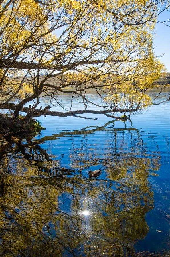Jeziorny McGregor, Canterbury region, Nowa Zelandia zdjęcia royalty free