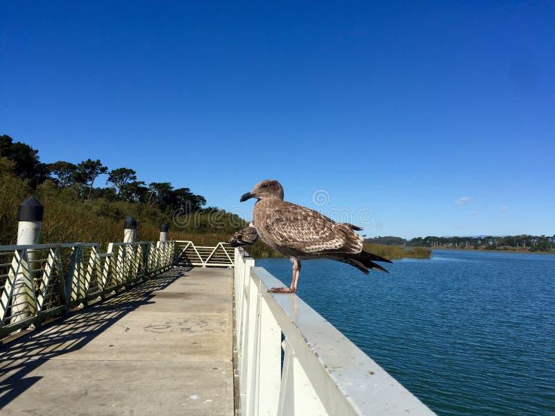 Jeziorny Merced San Francisc zdjęcia stock