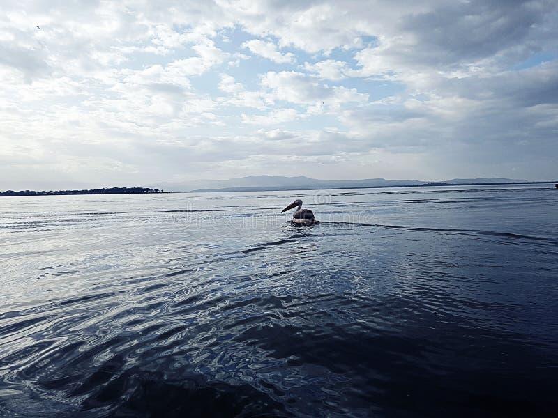 jeziorny naivasa w Kenya obrazy stock