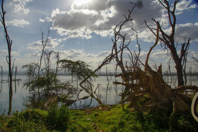 Jeziorny Nakuru, Kenja zdjęcia stock