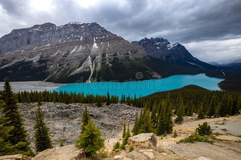 Jeziorny Peyto w Banff parku narodowym w Kanada zdjęcie royalty free
