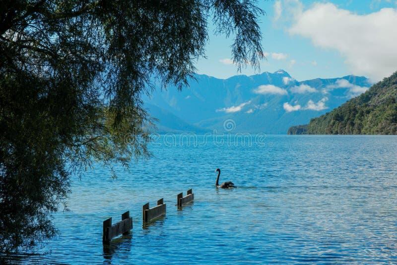 Jeziorny Rotoroa zdjęcia royalty free