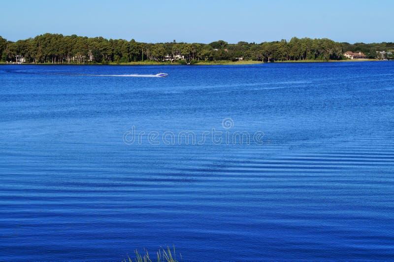 Jeziorny Tarpon obrazy royalty free